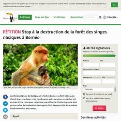 Stop à la destruction de la forêt des singes nasiques à Bornéo
