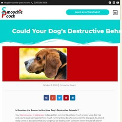 Could Your Dog's Destructive Behavior Be Due to Boredom