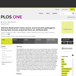 PLOS 24/11/20 Varroa destructor mites vector and transmit pathogenic honey bee viruses acquired from an artificial diet