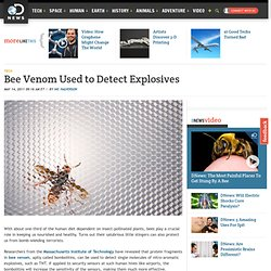 Bee Venom Used to Detect Explosives