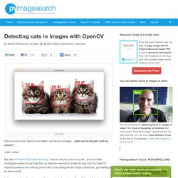 Detecting cats in images with OpenCV