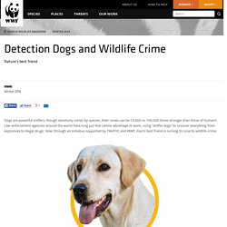 Detection Dogs and Wildlife Crime
