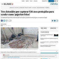 Tres detenidos por capturar 836 aves protegidas para vender como 'pajaritos fritos'
