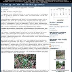 """De l'art de déterminer un """"coin"""" à cèpes... - Le Blog de Cristau de Hauguernes"""