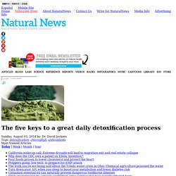 The five keys to a great daily detoxification process - NaturalNews.com