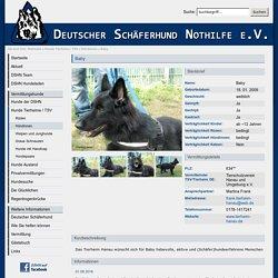 Deutscher Schäferhund Nothilfe e.V. - Baby