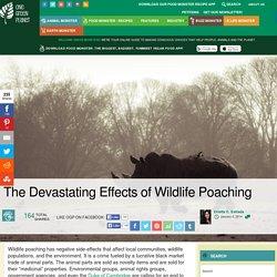 The Devastating Effects of Wildlife Poaching