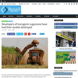 BRAZIL MONITOR 24/06/18 Developers of transgenic sugarcane have had their studies destroyed