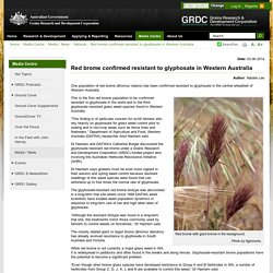 GRDC 03/06/14 Red brome confirmed resistant to glyphosate in Western Australia