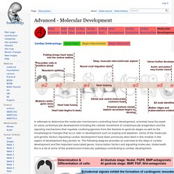 Advanced - Molecular Development - Embryology