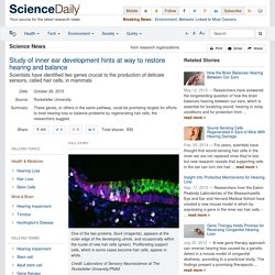 Study of inner ear development hints at way to restore hearing and balance: Scientists have identified two genes crucial to the production of delicate sensors, called hair cells, in mammals