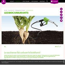 Développement durable – Les biocarburants