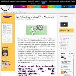 Le Développement Du Cerveau