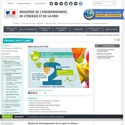 Stades de développement de la vigne en Alsace - Ministère de l'Environnement, de l'Energie et de la Mer