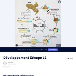 Développement Xénope L2 by patrick.pla on Genial.ly