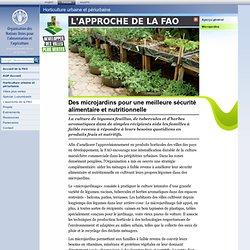 Développer des villes plus vertes: L'approche de la FAO - Microjardins