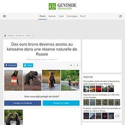 Des ours bruns devenus accros au kérosène dans une réserve naturelle de Russie