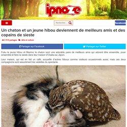 Un chaton et un jeune hibou deviennent de meilleurs amis et des copains de sieste