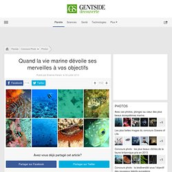 Photos - Quand la vie marine dévoile ses merveilles à vos objectifs