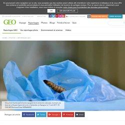 Une larve dévoreuse de plastique, nouvel espoir pour l'environnement