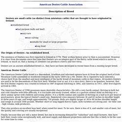 Dexter Cattle: Breed Description
