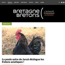 La poule noire de Janzé dézingue les frelons asiatiques ! - Bretagne Bretons