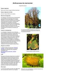 Institut fédéral de recherches WSL - Anthracnose du marronnier.