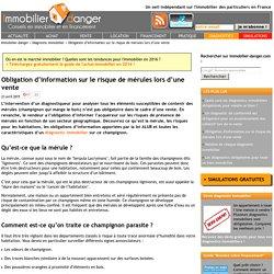 Diagnostic mérule : devoir d'information pour vendre