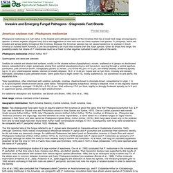 Diagnostic Fact Sheet for Phakopsora meibomiae