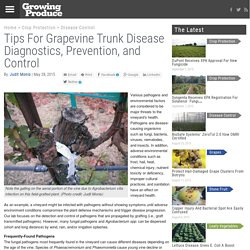 GROWING PRODUCE 28/05/15 Tips For Grapevine Trunk Disease Diagnostics, Prevention, and Control
