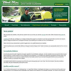 Maladies - Diagnostiquer votre pelouse - Weed Man - Traitement et entretien de pelouse et gazon, traitement mauvaises herbes, punaises, fertilisation