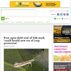 FRESH FRUIT PORTAL 29/01/20 First open-field trial of GM moth 'could herald new era of crop protection'