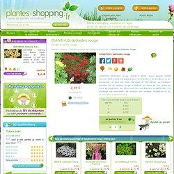 DIANTHUS deltoides rouge - Plantes vivaces - Plantes Shopping, jardinerie en ligne