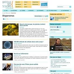 Banque des savoirs - Diaporamas