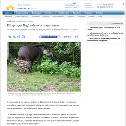 El tapir que llegó a devolver esperanzas