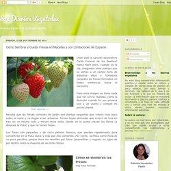 Los Diarios Vegetales: Como Sembrar y Cuidar Fresas en Macetas y con Limitaciones de Espacio