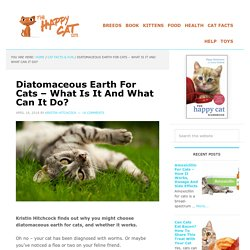 Diatomaceous Earth For Cats - What Is It And What Can It Do?
