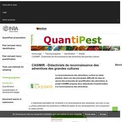 QuantiPest - CASIMIR - Didacticiels de reconnaissance des adventices des grandes cultures