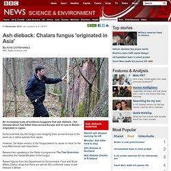 BBC 12/12/12 Ash dieback: Chalara fungus 'originated in Asia'