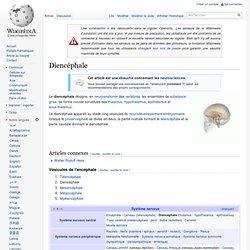 Diencéphale