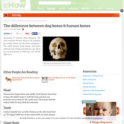 The difference between dog bones & human bones