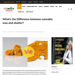 What's the Difference between cannabis wax and shatter? - The Weed Lovers