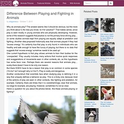 Difference Between Playing and Fighting in Animals | Animals Zone - StumbleUpon