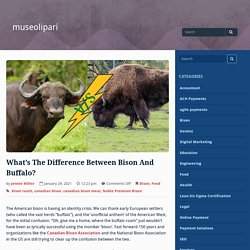 What's The Difference Between Bison And Buffalo? – museolipari