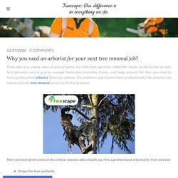 Why you need an arborist for your next tree removal job?