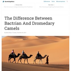 The Difference Between Bactrian And Dromedary Camels