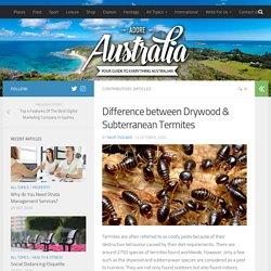 Difference between Drywood & Subterranean Termites – Adore Australia