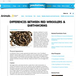 Differences Between Red Wrigglers & Earthworms