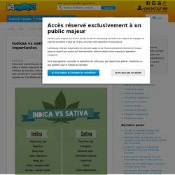 Indicas vs sativas: les 5 différences les plus importantes
