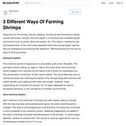 3 Different Ways Of Farming Shrimps